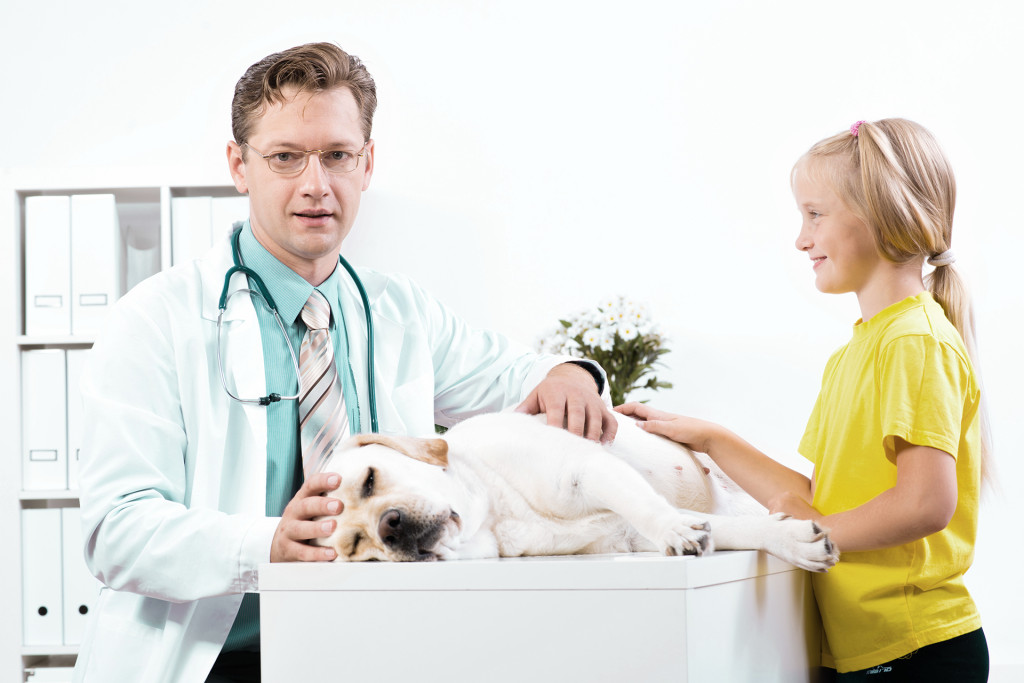 girl holds a dog in a veterinary clinic, veterinarian inspects a dog