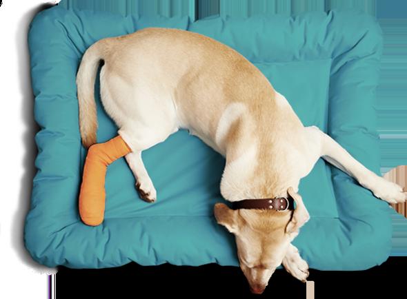 dog-sleep